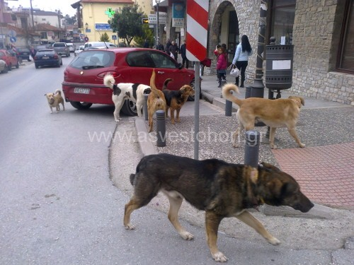 Μία γνώριμη εικόνα από την κεντρική πλατεία του Ασβεστοχωρίου, όπου τα αδέσποτα περιφέρονται αναζητώντας τροφή
