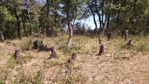 """""""Κρανίου τόπο"""" θυμίζει σε ορισμένες περιοχές του το Δάσος Κουρί, εξαιτίας της λαθροϋλοτομίας."""